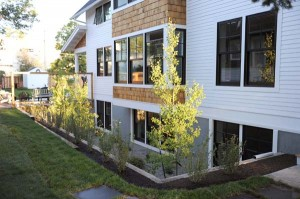 the basement window well with newly planted Aspens